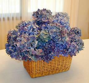 blue-hydrangea-flowers-in-basket-compressor.jpg