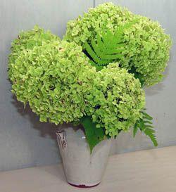 green-hydrangea-bouquet-compressor.jpg
