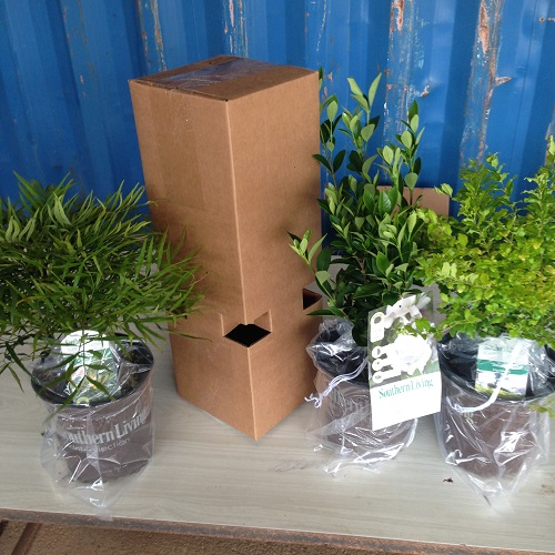 plants-ready-for-the-custom-box.jpg