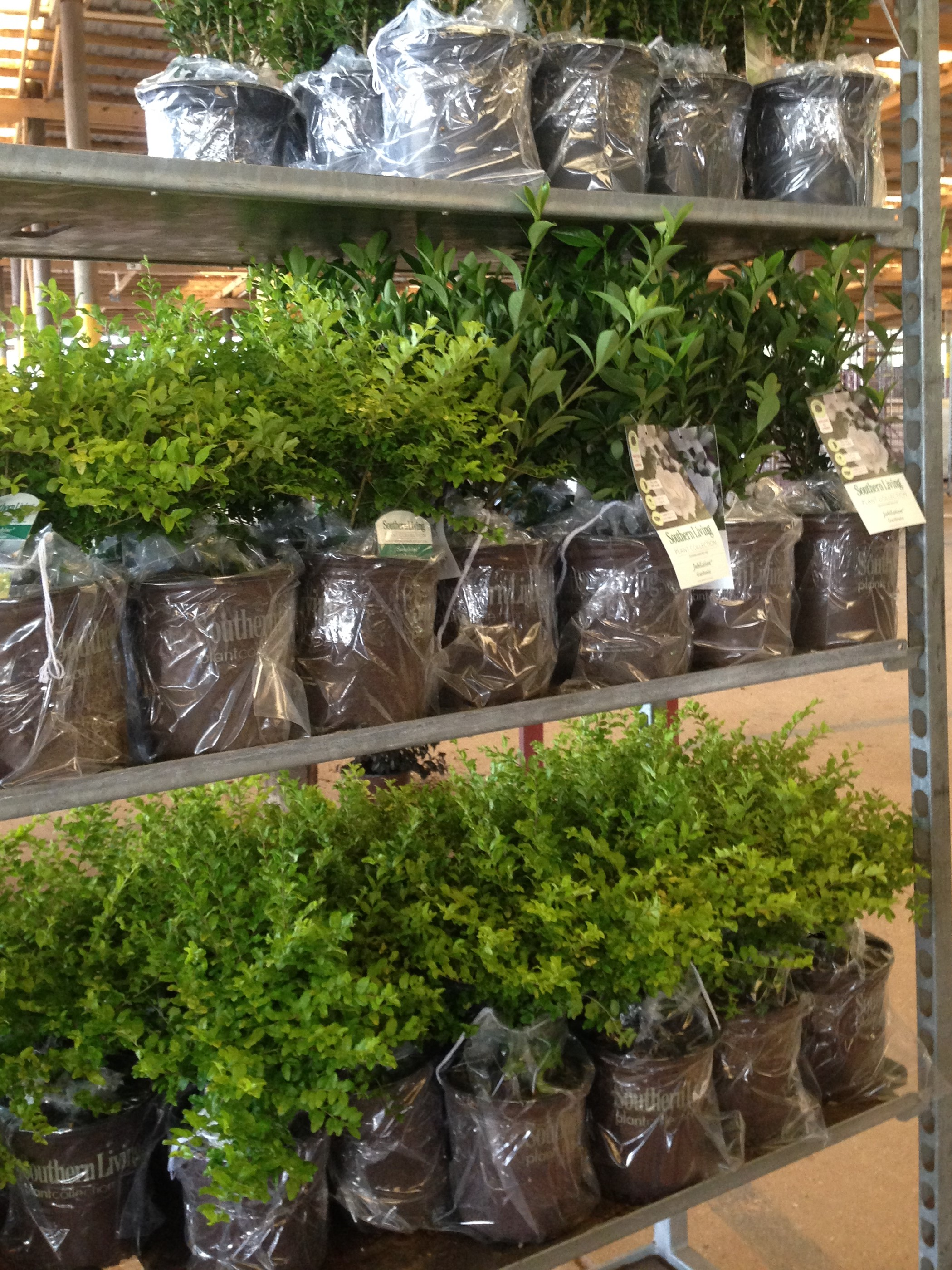 rack-full-of-plants-ready-to-ship-out.jpg