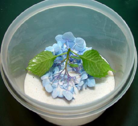 step-4c-drying-hydrangeas-compressor.jpg