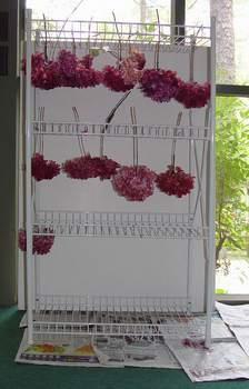 step-5-dyeing-hydrangeas.jpg